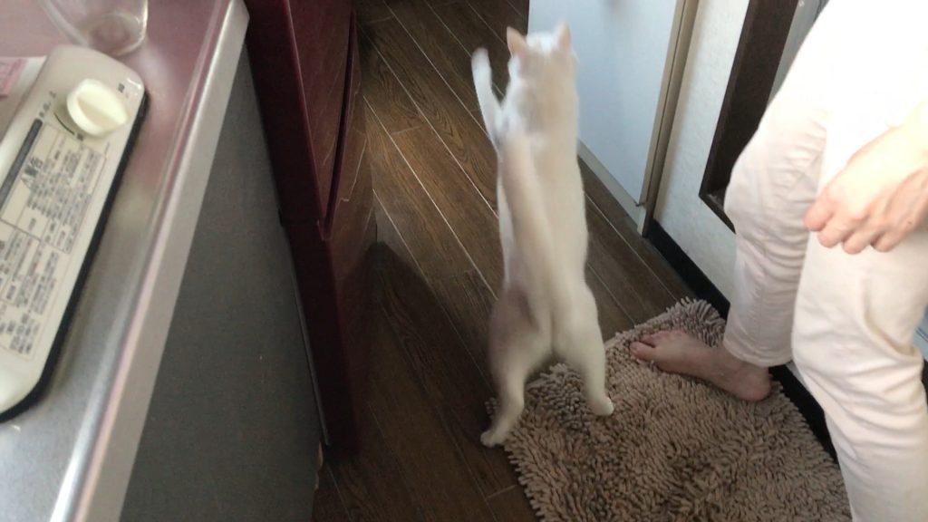 じゃれ猫にゃウール