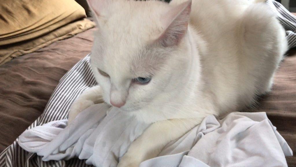 汗の匂いが好き猫