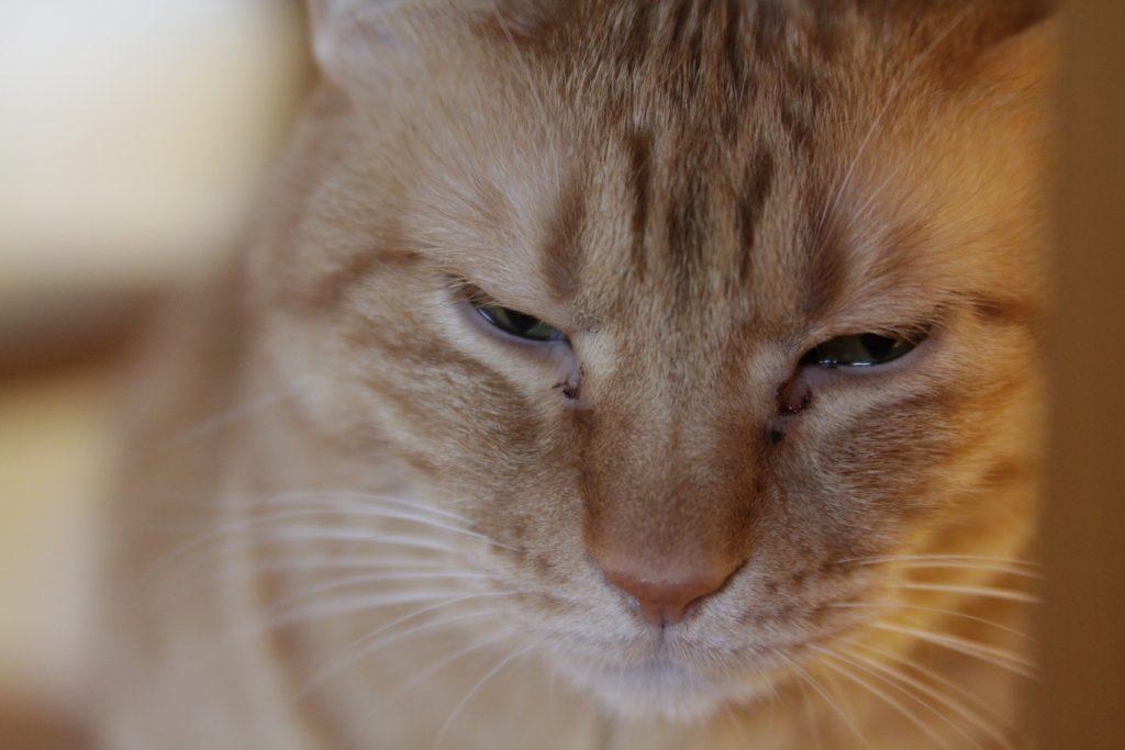 猫の目ヤニ