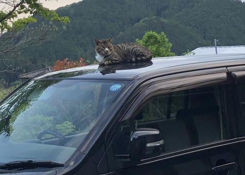 ボンネットの猫