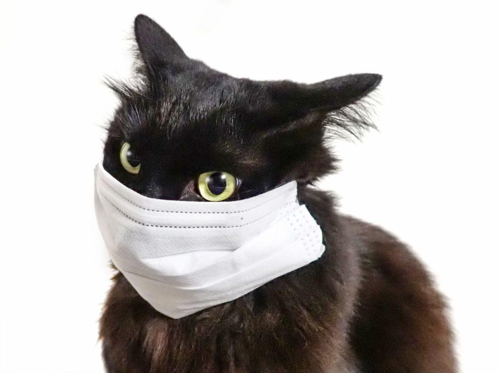 猫のマスク