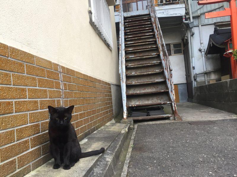猫アパート